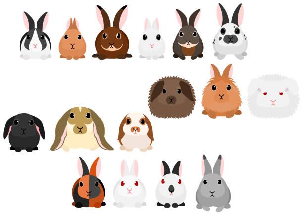 kaninchen-grenze-set - kaninchen stock-grafiken, -clipart, -cartoons und -symbole