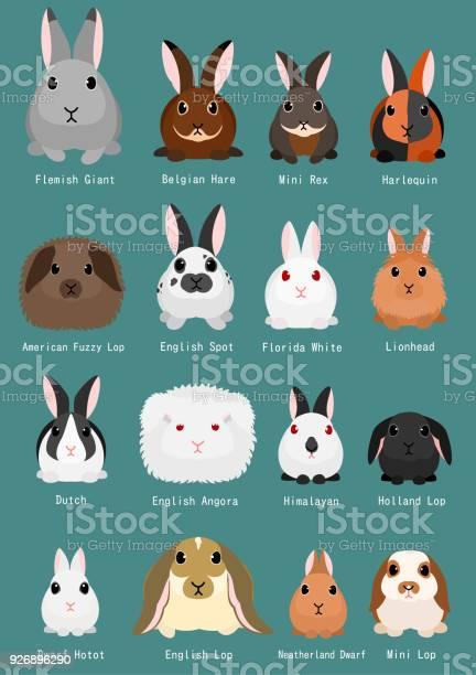 Rabbits breeds chart vector id926896290?b=1&k=6&m=926896290&s=612x612&h=qf2gl0ul4stujieo2ozedn9risulduabtwyzpwyavlm=