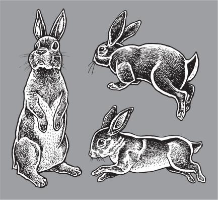 Rabbits - Hare, Bunny