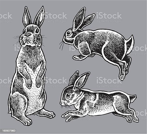 Rabbits hare bunny vector id165907960?b=1&k=6&m=165907960&s=612x612&h=g4rp8fwzisbunxgfidyvpdrfjuklz aidrglyxislt4=