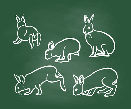 Rabbits In Action Chalkboard