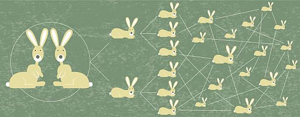 Rabbits reproduction management vector art illustration