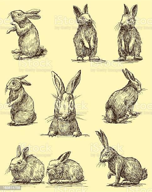 Rabbits vector id165814758?b=1&k=6&m=165814758&s=612x612&h=2pn9keuaoe459r2veowzub5ov3xs1nwefj9ss81hobi=