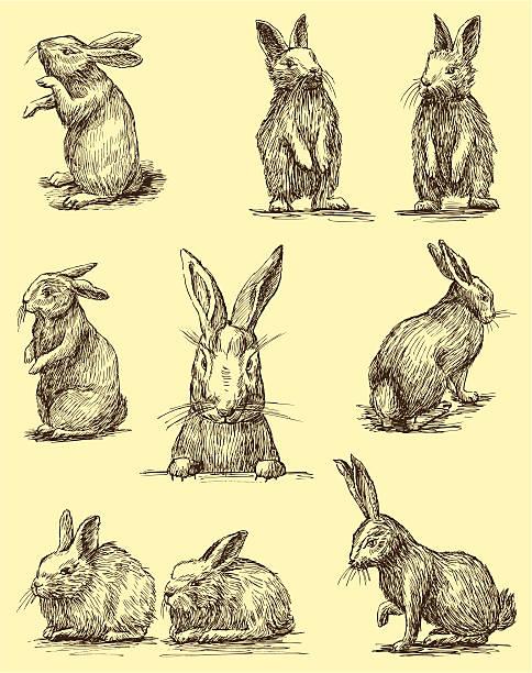 rabbits - rabbit animal stock illustrations