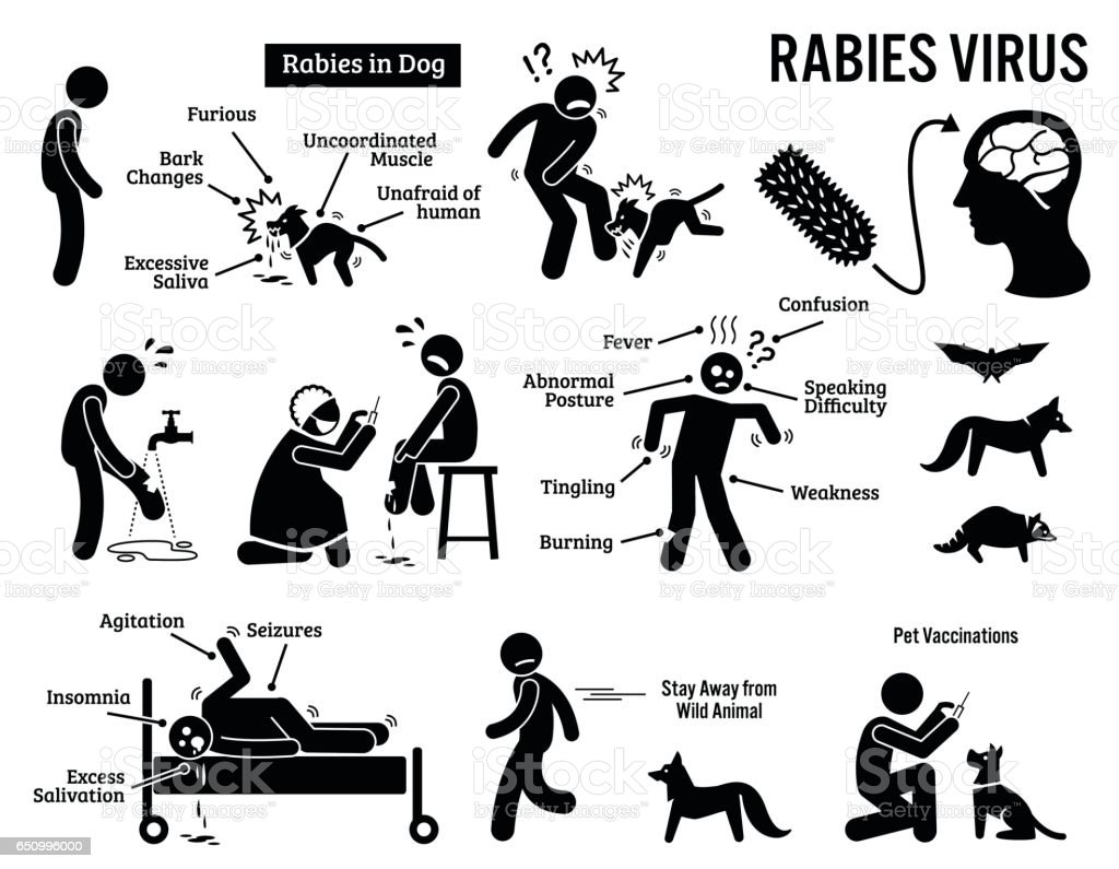 Rabies Virus in Human and Animal Stick Figure Pictogram Icons vector art illustration