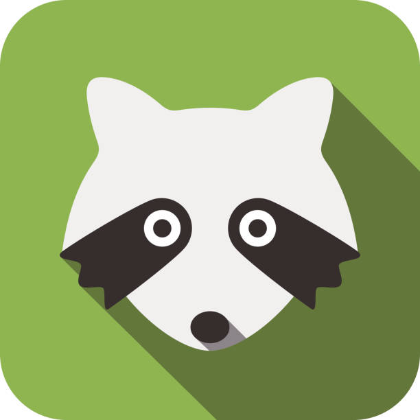 Best Raccoon Illustrations, Royalty-Free Vector Graphics ... Raccoon Face Clip Art