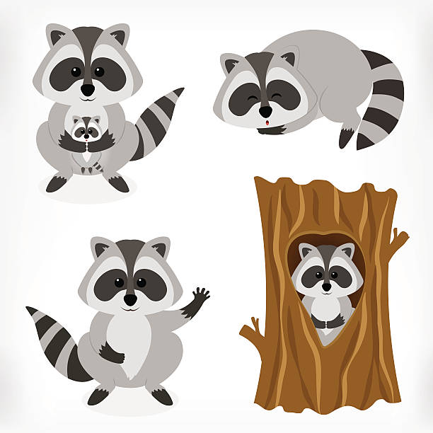 raccoon cartoon character in various expression - raccoon stock illustrations
