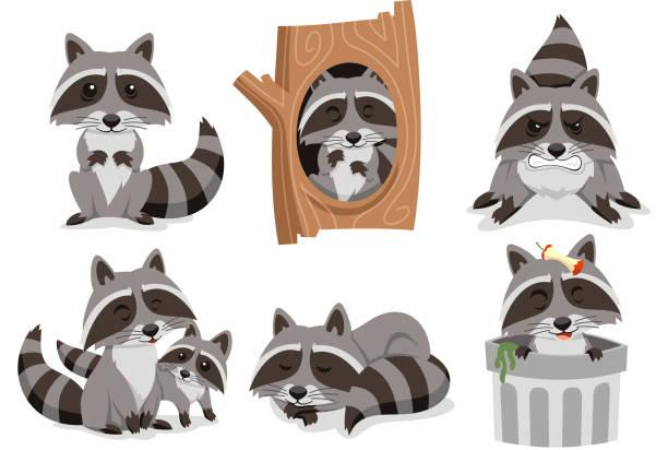 Raccoon Raccoons Set Raccoon Raccoons Set, with standing raccoon, raccoon inside tree, angry raccoon, family raccoon, sleeping raccoon and raccoon inside trash can.  Vector illustration cartoon. raccoon stock illustrations