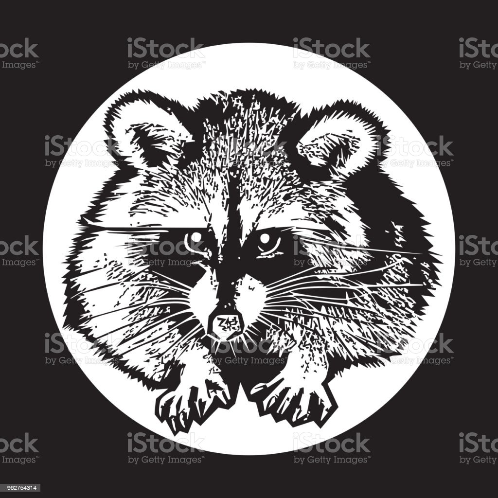 Guaxinim - ilustração gráfica realista. - Vetor de Animal royalty-free