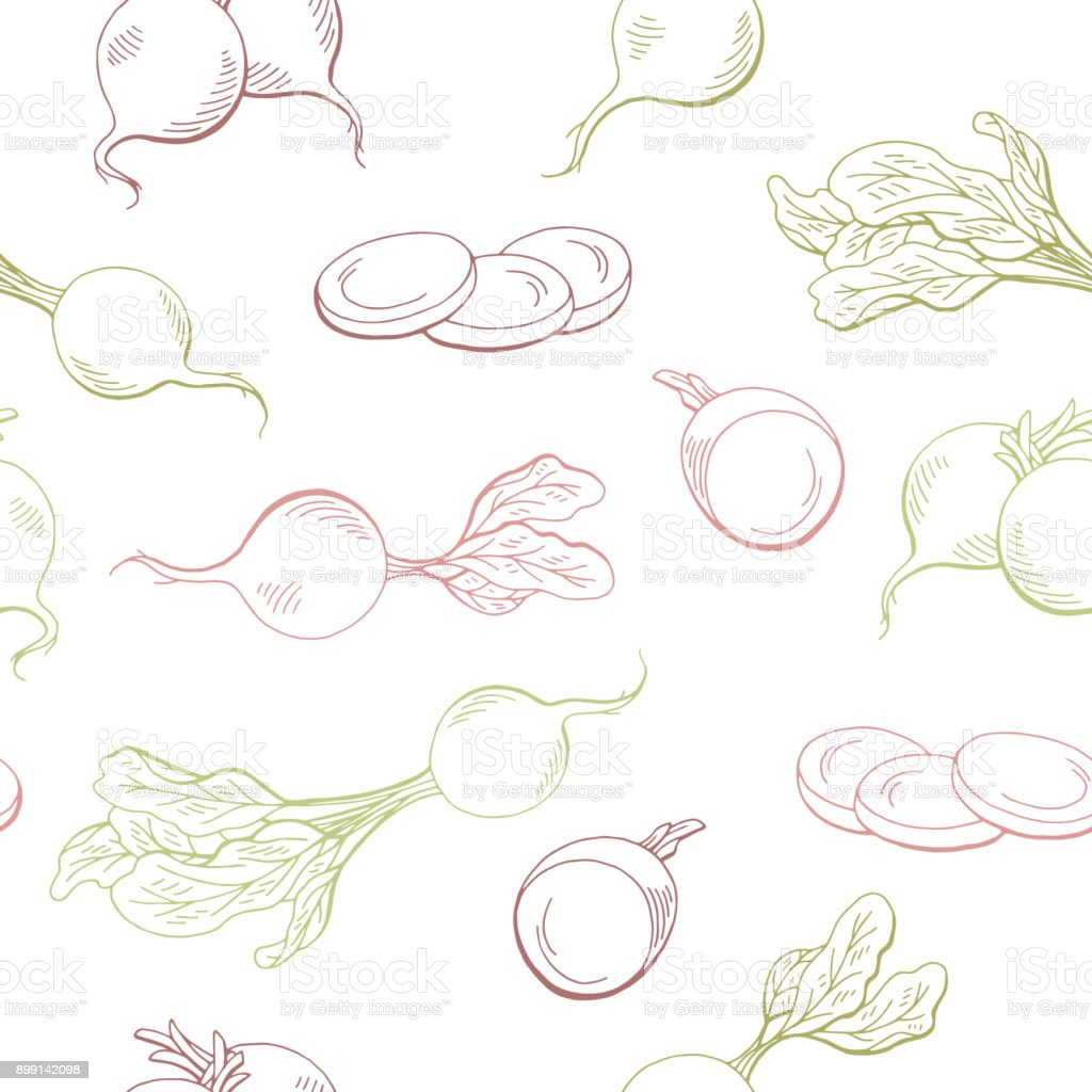 Radish graphic vegetable color seamless pattern sketch illustration vector