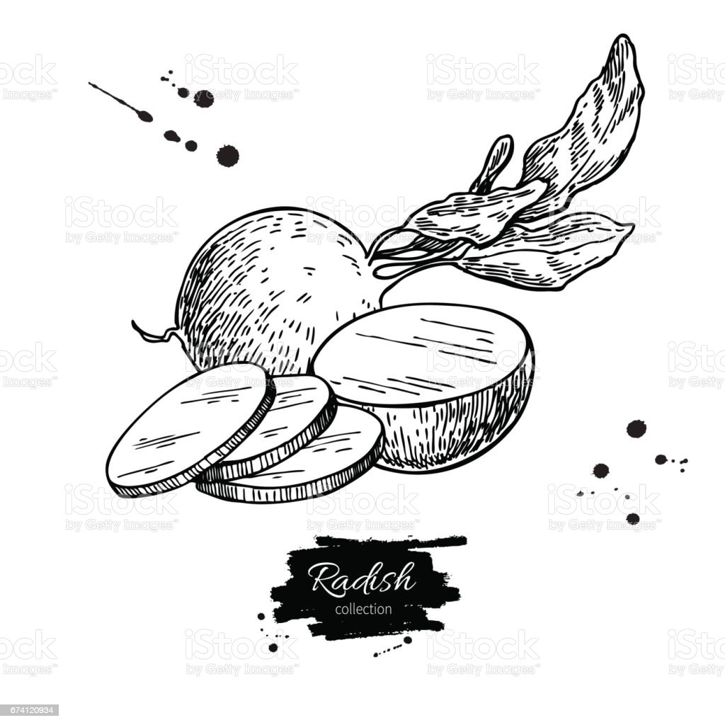 蘿蔔手繪向量圖。孤立的蔬菜刻樣式物件 wirh 切件。 免版稅 蘿蔔手繪向量圖孤立的蔬菜刻樣式物件 wirh 切件 向量插圖及更多 一片 圖片