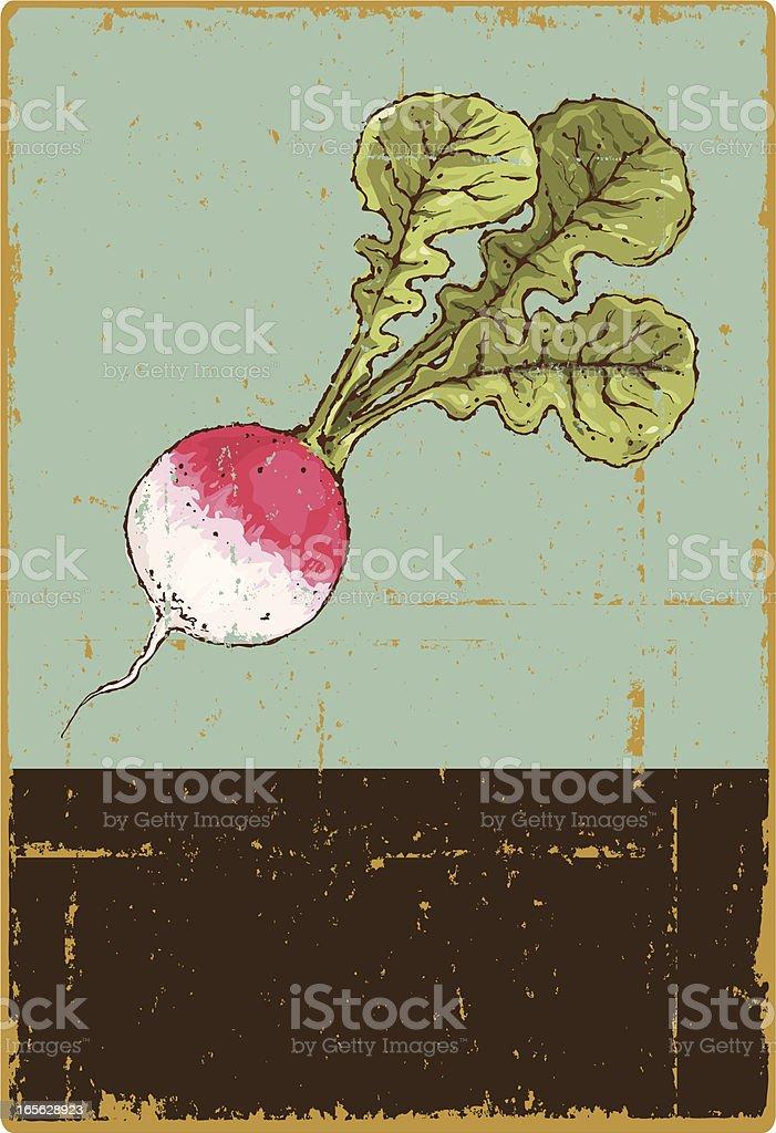 Radish royalty-free radish stock vector art & more images of clip art