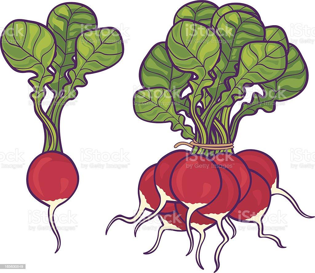 Radishes vector art illustration