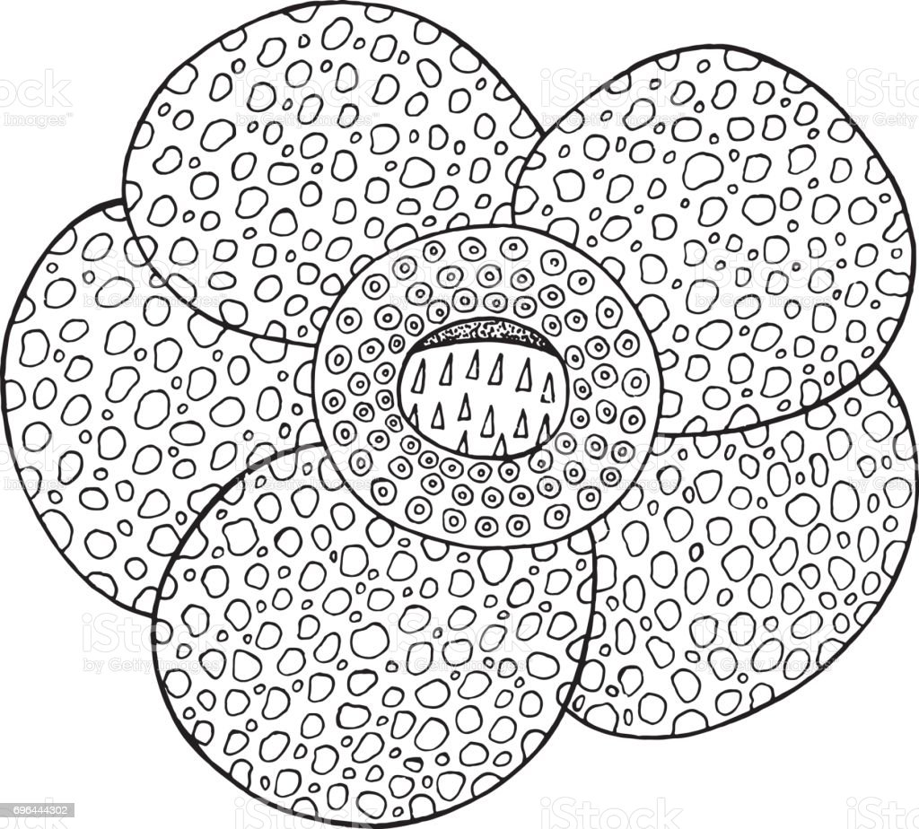 Ilustración de Elemento Aislado Del Vector De Flores Tropicales De ...