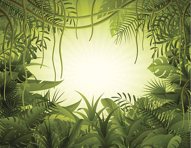 Rain forest Tropical forest background. High Resolution JPG,CS5 AI and Illustrator EPS 8 included. Each element is named,grouped and layered separately. amazon stock illustrations