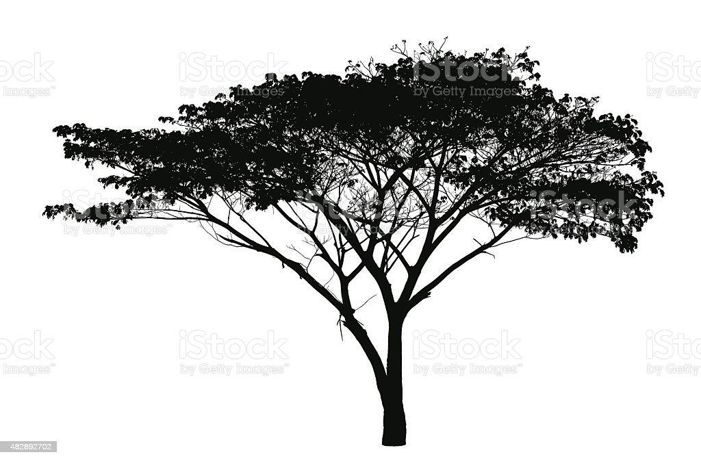 Rain tree silhouette : vector vector art illustration