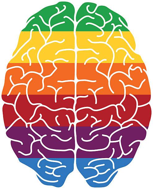 rainbow gehirn - sensorischer impuls stock-grafiken, -clipart, -cartoons und -symbole