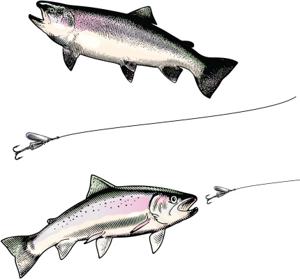 Rainbow Trout and Lure