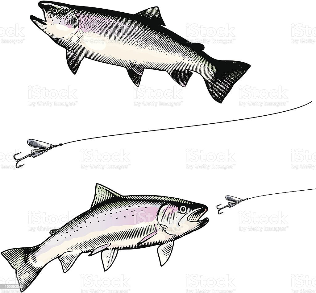 Rainbow Trout and Lure vector art illustration