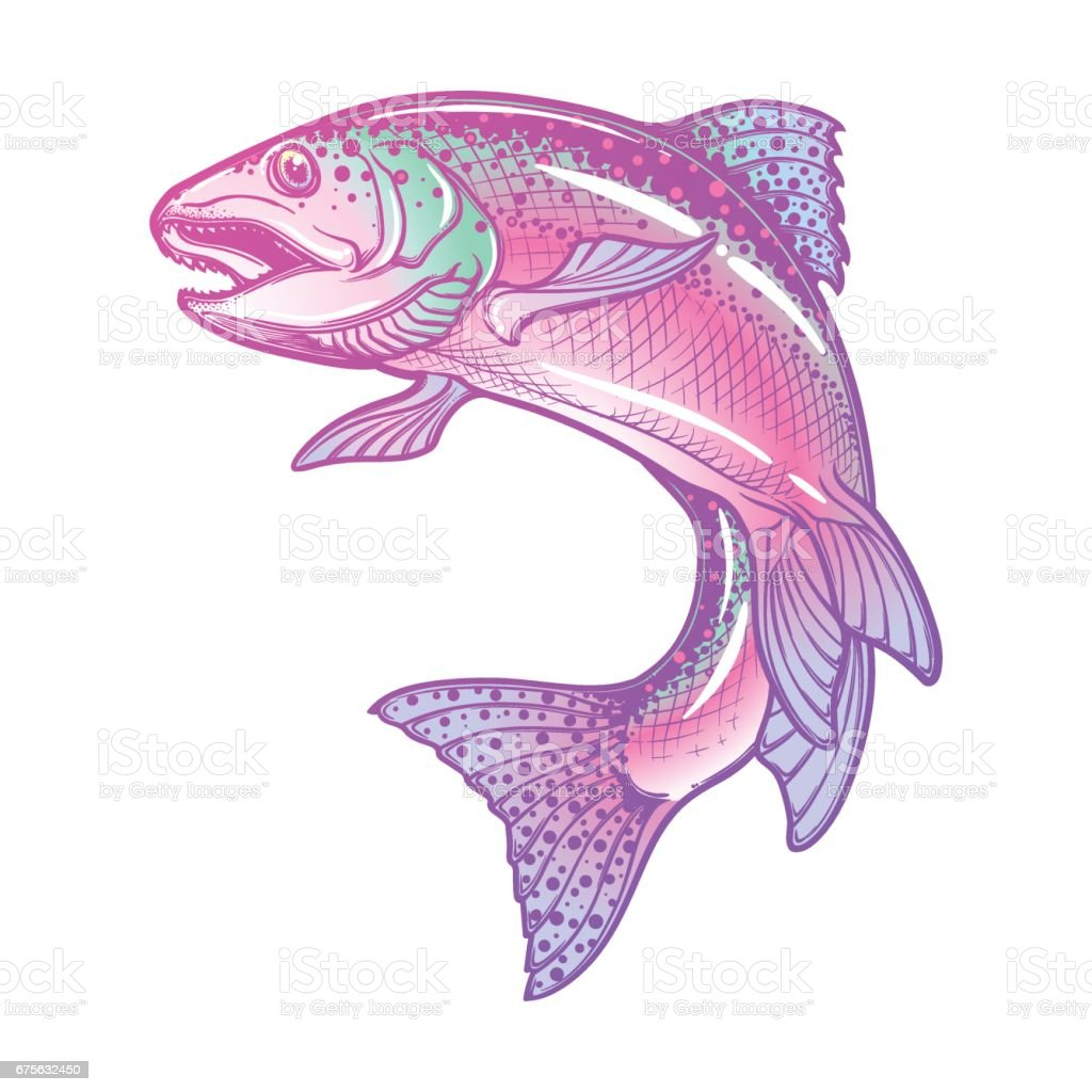 Rainbow trout color drawing vector art illustration