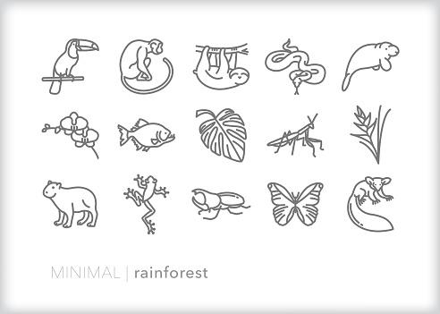 Rainforest animals and plants line icon set