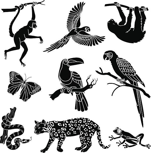 illustrazioni stock, clip art, cartoni animati e icone di tendenza di gli animali della foresta pluviale - ocelot