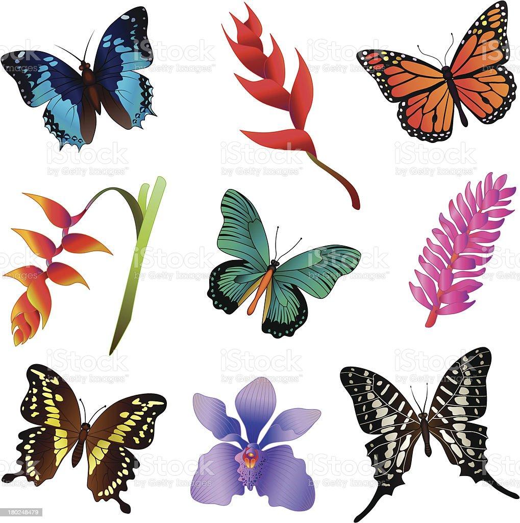 rainforest flowers and butterflies vector art illustration