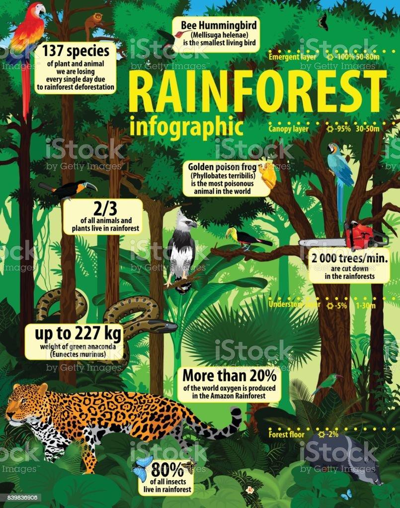 rainforest jungle infographic with animals - vector illustration vector art illustration