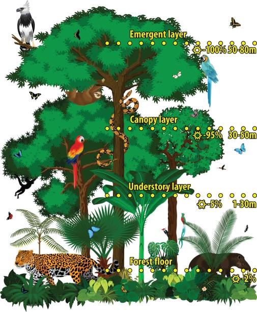 Rainforest jungle layers vector illustration. Vector Green Tropical Forest jungle with different animals. Rainforest jungle layers vector illustration. Vector Green Tropical Forest jungle with different animals. amazon stock illustrations