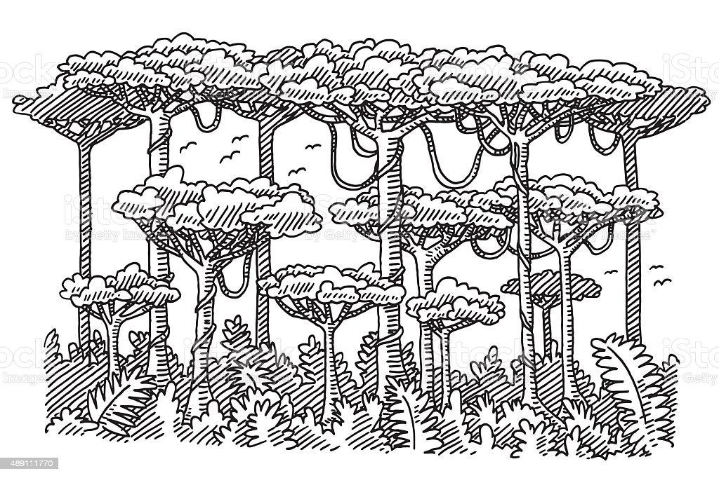 Ilustración de Selva Tropical Los árboles Dibujo y más banco de ...