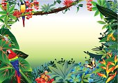 Vector illustrator of Rainforest Tropical Border.