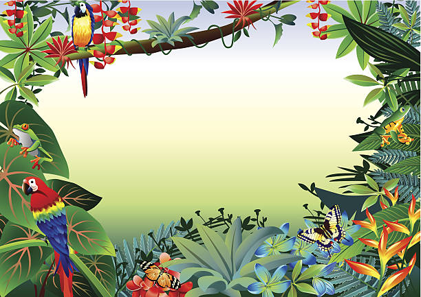 Rainforest Tropical Border Vector illustrator of Rainforest Tropical Border. bird of paradise plant stock illustrations