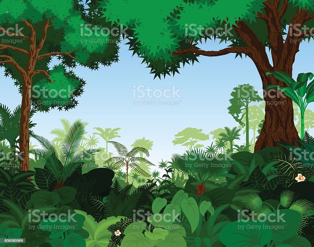 Rainforest vector illustration. Vector Green Tropical Forest jungle vector art illustration