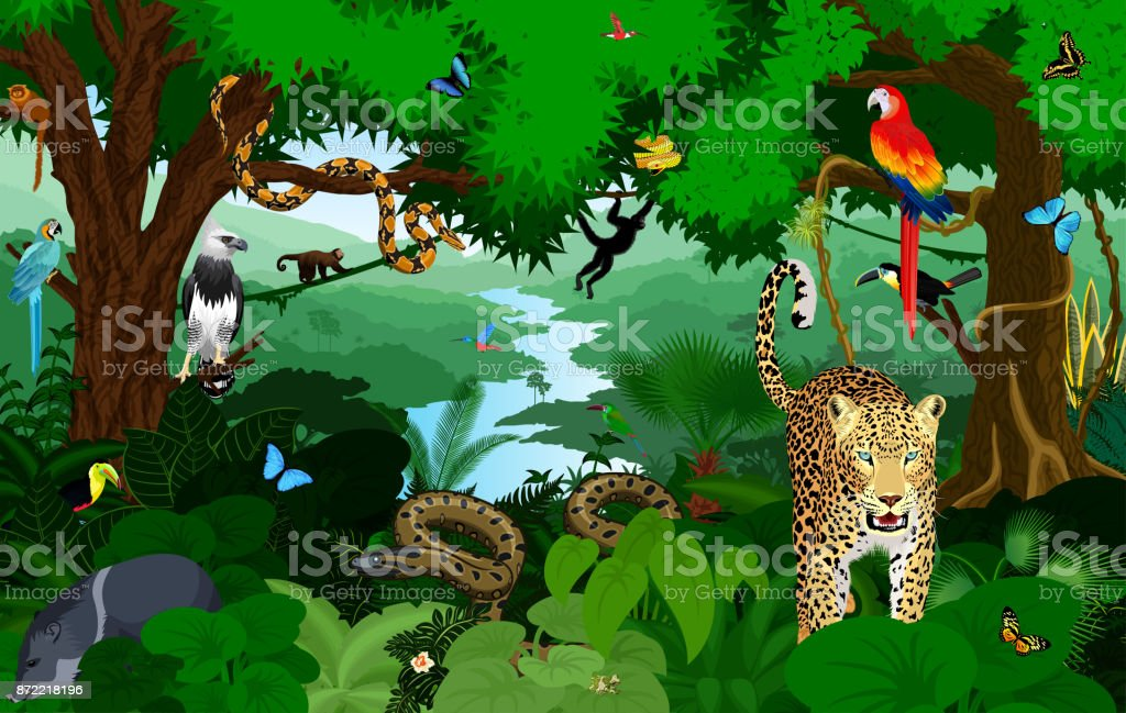 Rainforest with animals vector illustration. Vector Green Tropical Forest jungle with parrots, jaguar, boa, peccary, harpy, monkey, frog, toucan, anaconda and butterflies. vector art illustration
