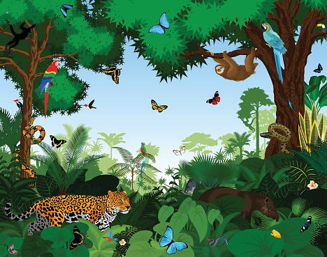 Rainforest With Animals Vector Illustration Stock ...