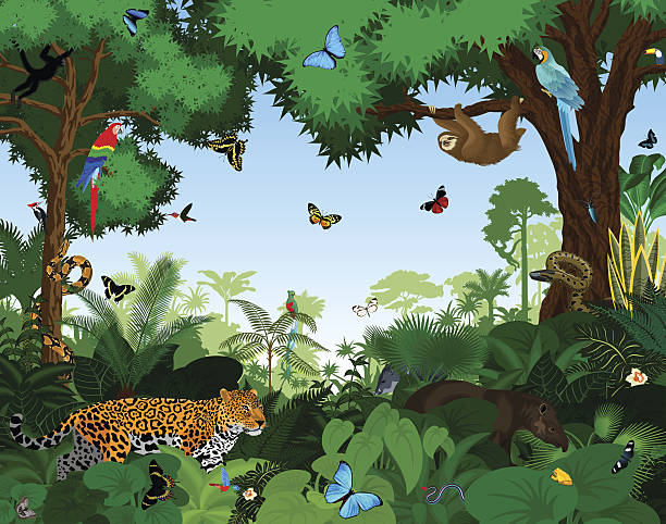 Rainforest with animals vector illustration. Rainforest with animals vector illustration. Vector Green Tropical Forest jungle with parrots, jaguar, tapir, sloth, anaconda and butterflies. tropical rainforest stock illustrations