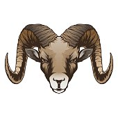 Free Wild Bighorn Clipart and Vector Graphics - Clipart.me