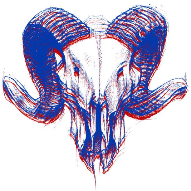 ram skull 3d - animal skull stock illustrations
