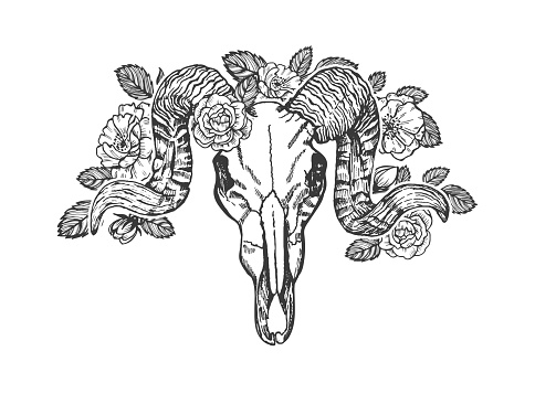 Ram skull decorated with roses vector sketch.