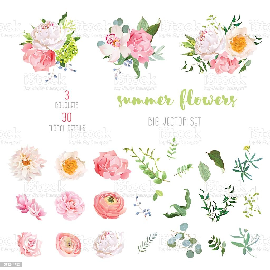 Ranunculus, rose, peony, dahlia, camellia, carnation, orchid, hydrangea vector collection royalty-free ranunculus rose peony dahlia camellia carnation orchid hydrangea vector collection stock illustration - download image now