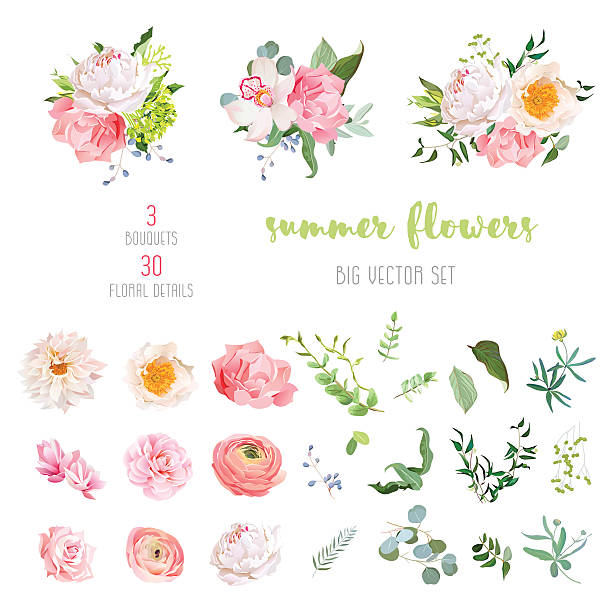 Ranunculus, rose, peony, dahlia, camellia, carnation, orchid, hydrangea vector collection​​vectorkunst illustratie