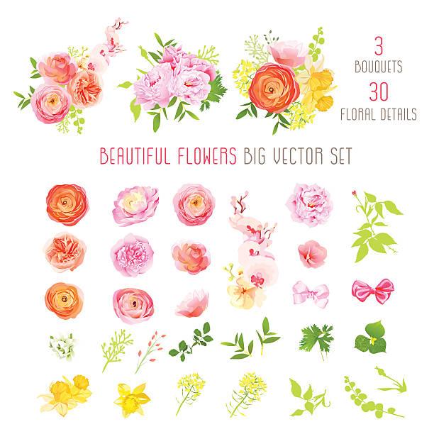 ranunkel, rosa pfingstrose, narzisse, orchidee blume große vektor-sammlung - blumengirlanden stock-grafiken, -clipart, -cartoons und -symbole