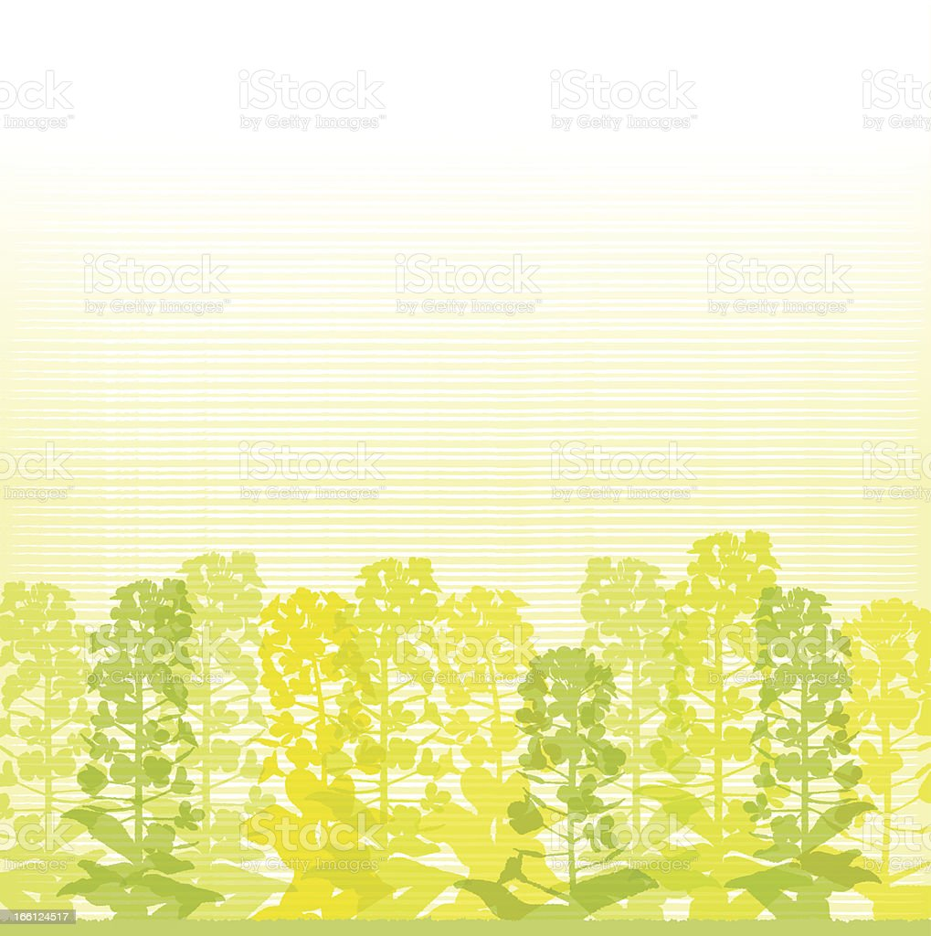 Rape blossom silhouettes on lined background vector art illustration
