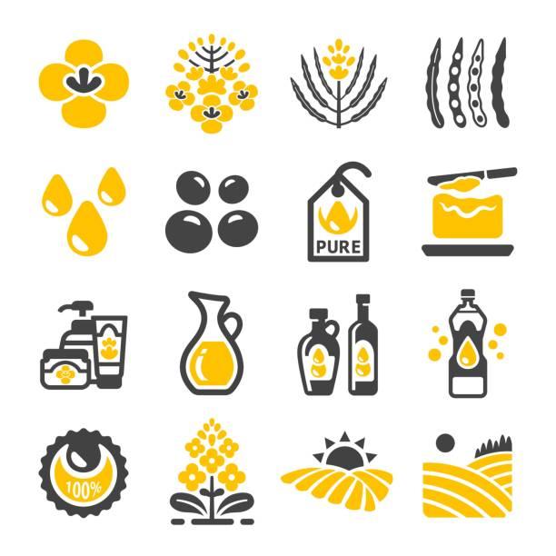 ilustrações de stock, clip art, desenhos animados e ícones de rapeseed icon - manteiga
