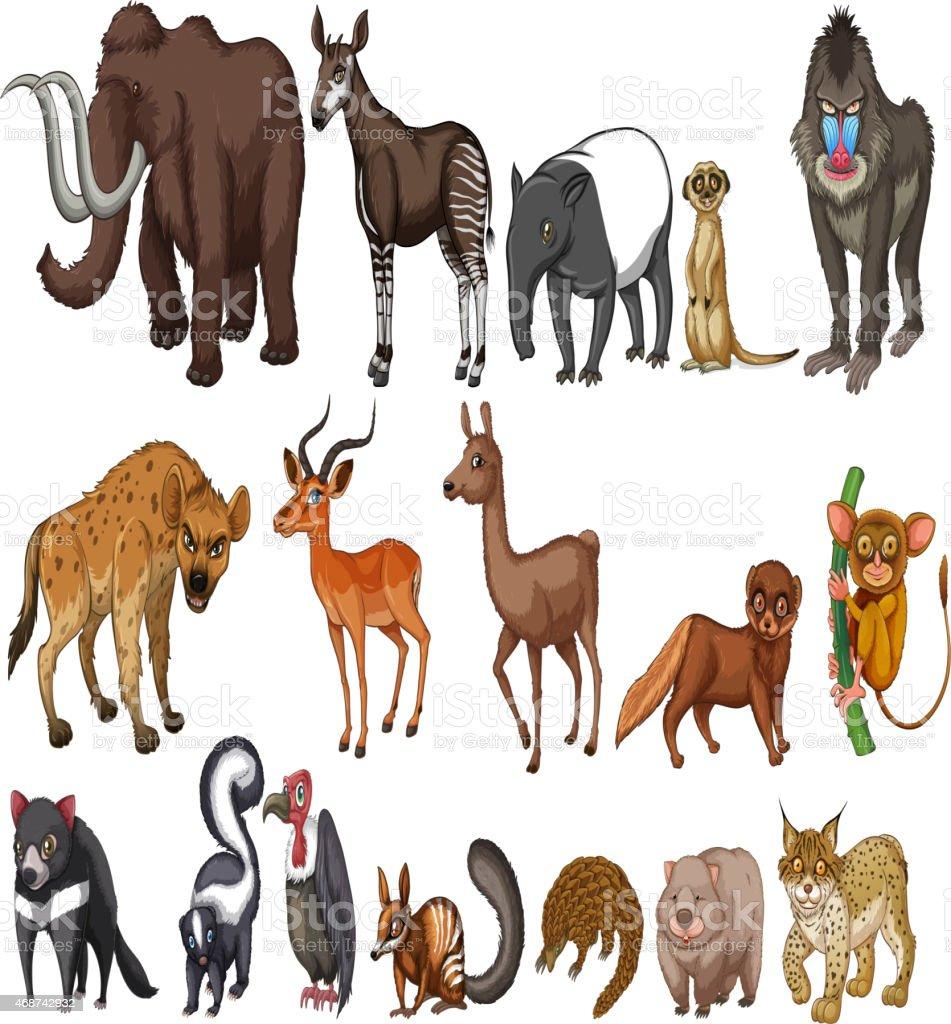 Rare animals vector art illustration