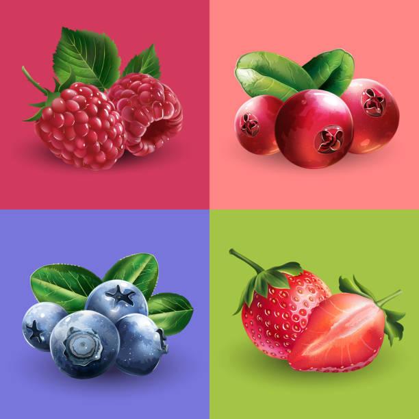 illustrazioni stock, clip art, cartoni animati e icone di tendenza di raspberries, cranberries, blueberries and strawberries - mirtilli