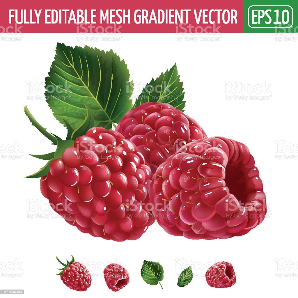Raspberries on white background. Vector illustration vector art illustration