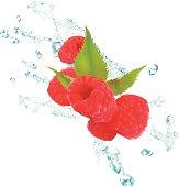 Raspberries Splash - Vector Illustration