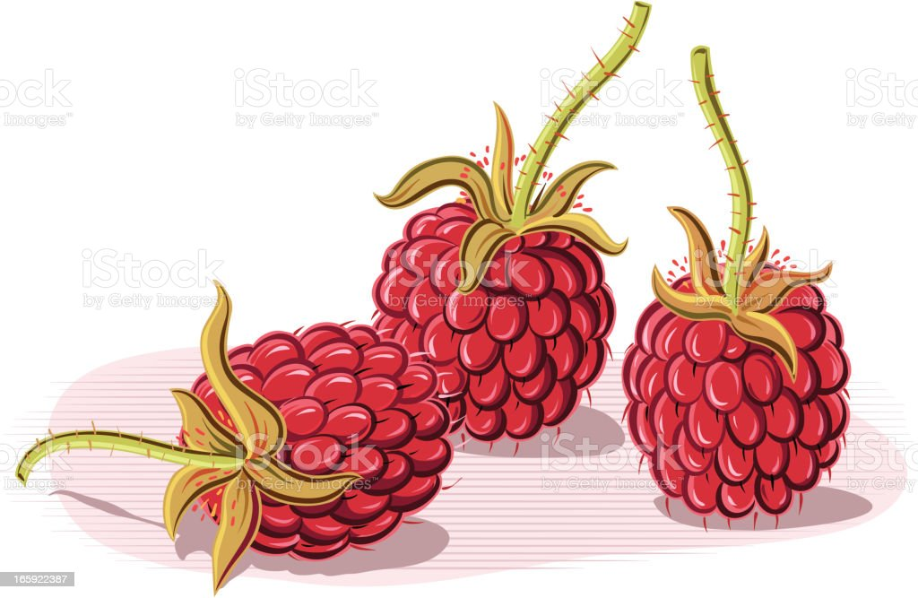 raspberries royalty-free stock vector art
