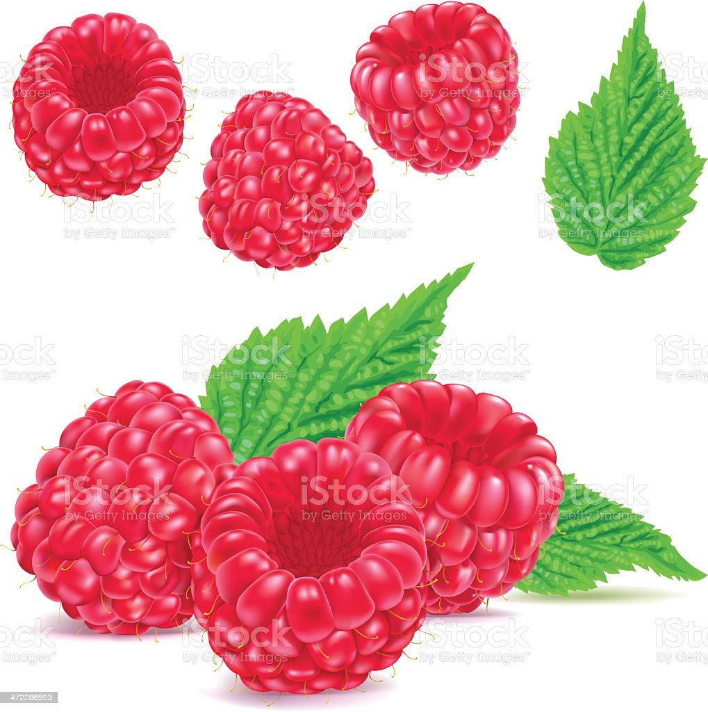 Raspberries vector art illustration